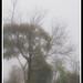 Triste Nevoa