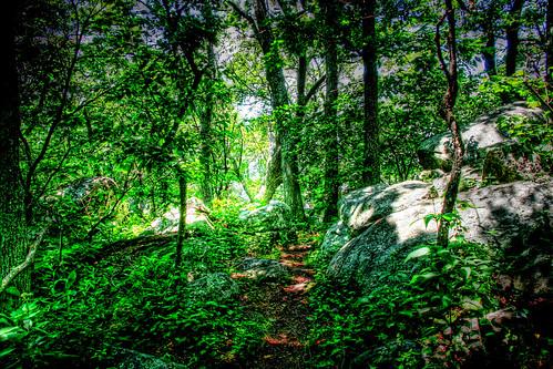 AT Wilderness