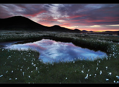 Cotton Grass - Landmannalaugar, Iceland by orvaratli