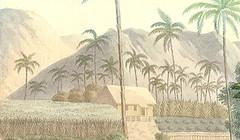 Farming in Ancient Guam