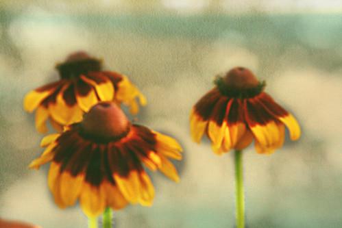 365-176b Flowers
