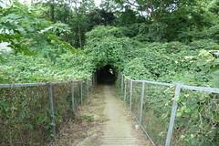 釜利谷市民の森(Kamariya Community Woods)