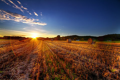 Farewell, Summer Sun