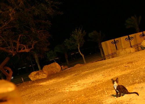 Dead Sea cats