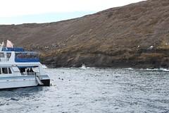 Molokini Snorklers