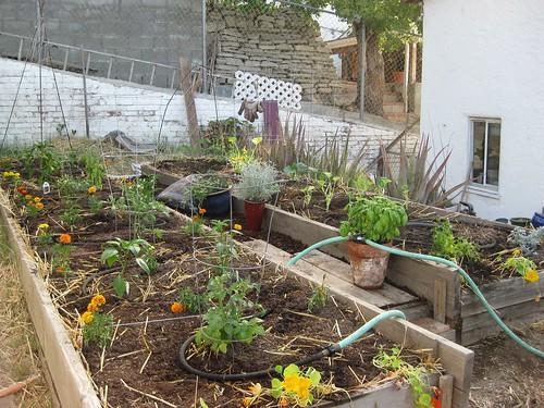 A Planted Garden!