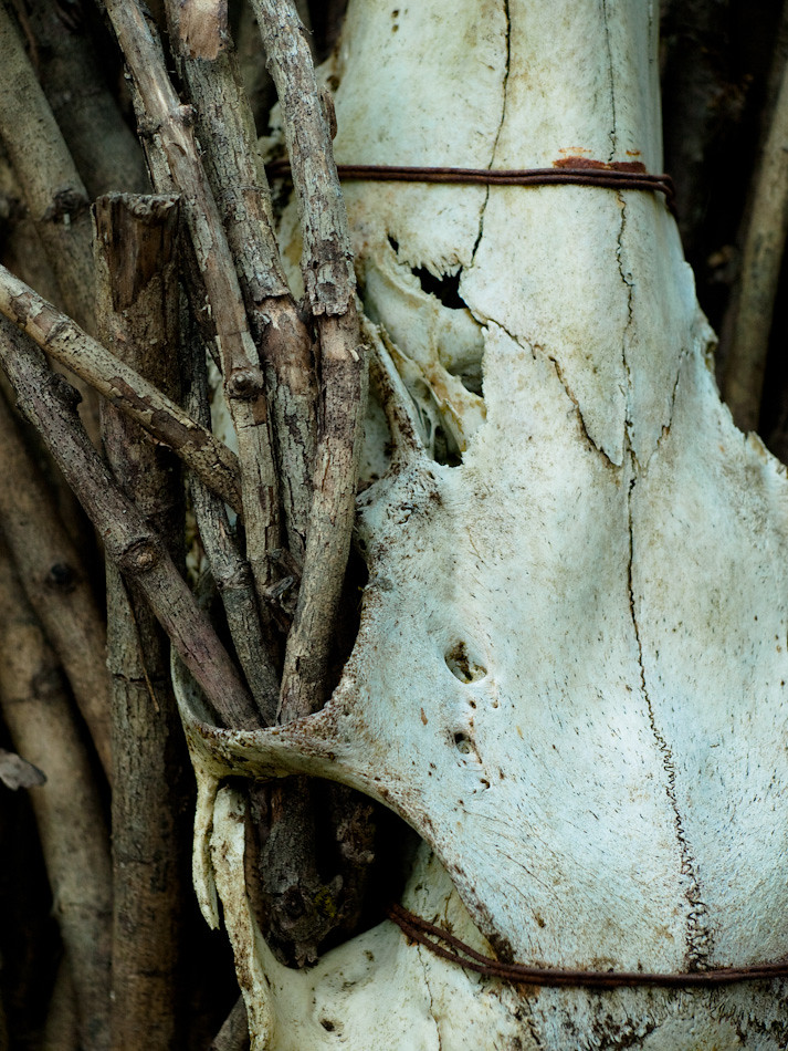 Skull and Twigs