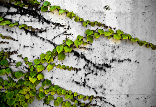Wall & Vine (by orb9220)