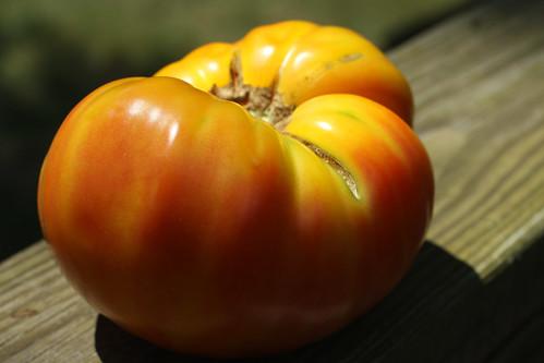 Goldy Tomato