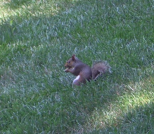 the other squirrel