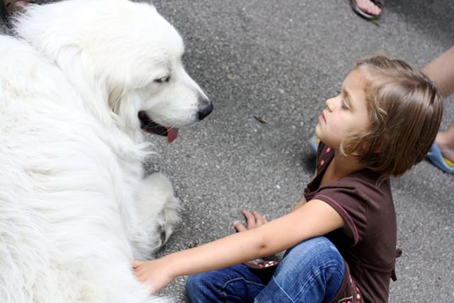 dog love - 2