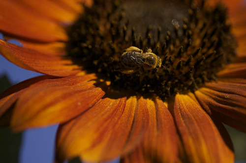 a coat of pollen