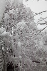 "Snow covered branches • <a style=""font-size:0.8em;"" href=""http://www.flickr.com/photos/54494252@N00/4925869501/"" target=""_blank"">View on Flickr</a>"