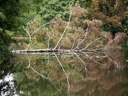 12 x ein Baum - August