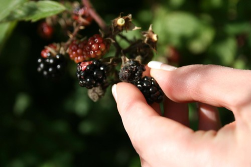 A Conscious Search For Blackberries