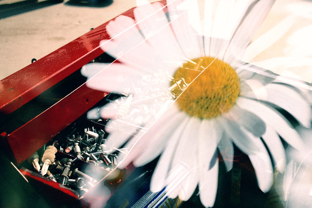 toolbox and daisy, the perplexingparadox, CC-BY