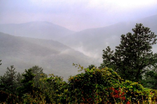 Lonesome Mountain Mist