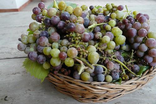 grapes of summer