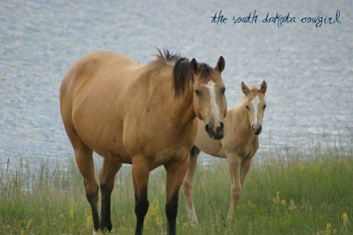 Frostine and her 2010 colt