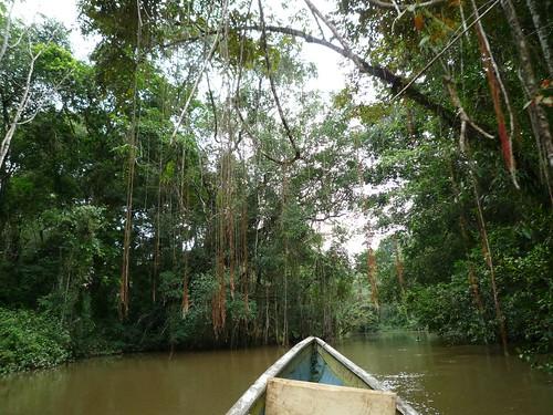 Unter Lianen mit dem Kanu