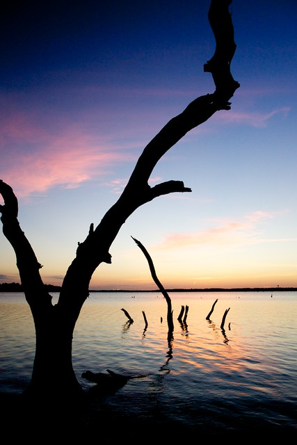 Deadwood silhouetted against a lake morning sky