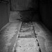 Trappa - Ner i källaren