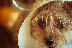 sad puppy [598]
