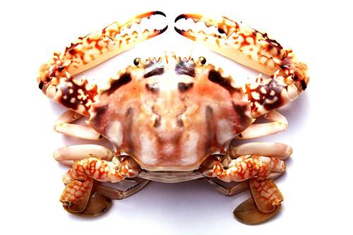 sea food (1)