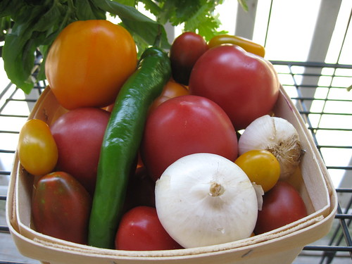 salsa kit