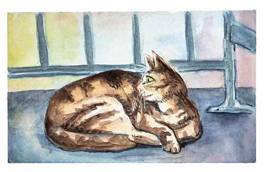 balc-cat