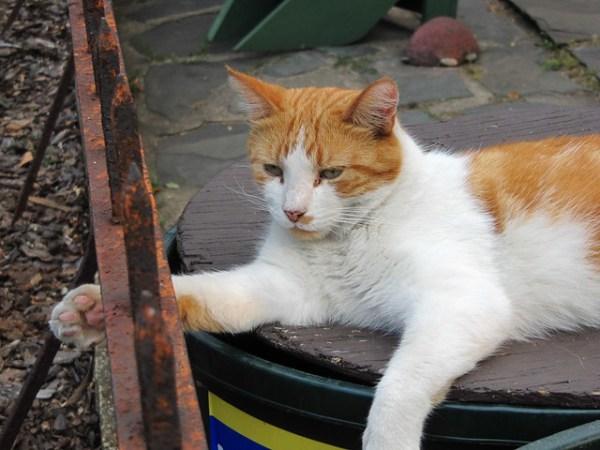 Oak Street cat