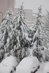 Snow covered trees and cars