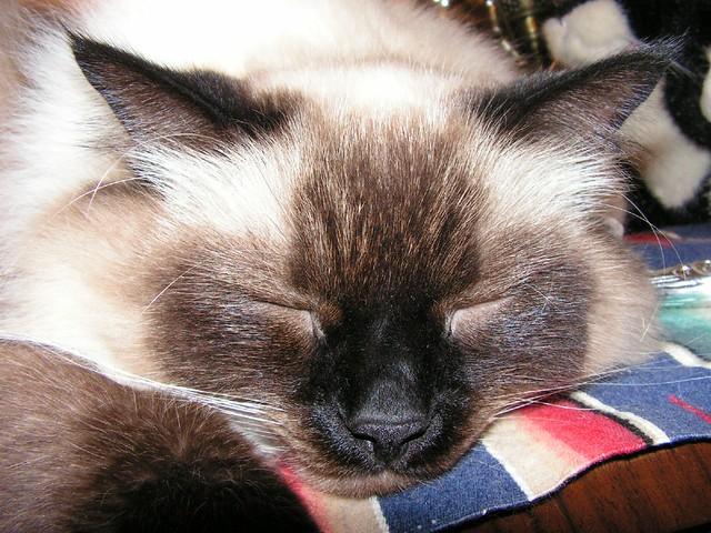Do not disturb the slumbering Prince