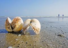 Shell on Kiawah Beach4