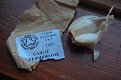 10 10 10_garlic_0001