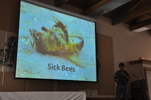 Bee health education