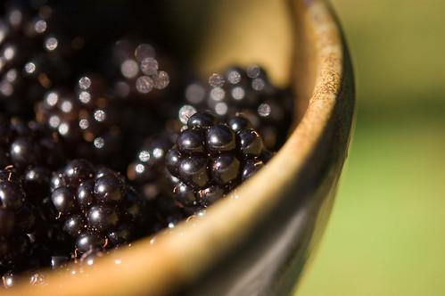bowl of prickly (by bookgrl)