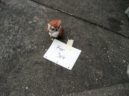 Owl for sale