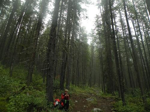 Wabasso Lake Trail
