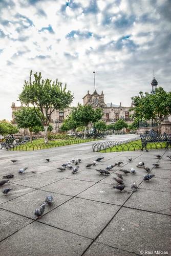 Palomas y Quisoco