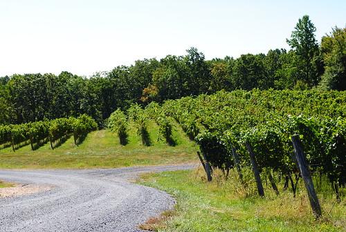 Rows of vines, Linden Vineyards