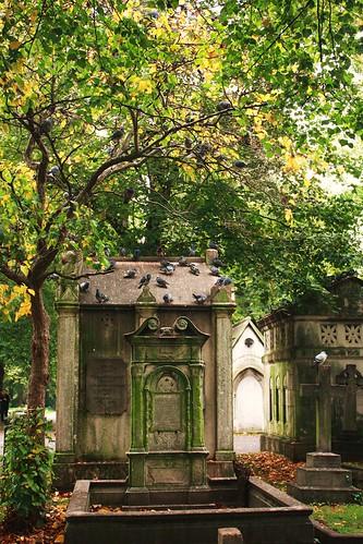 Brompton Cemetery Birds