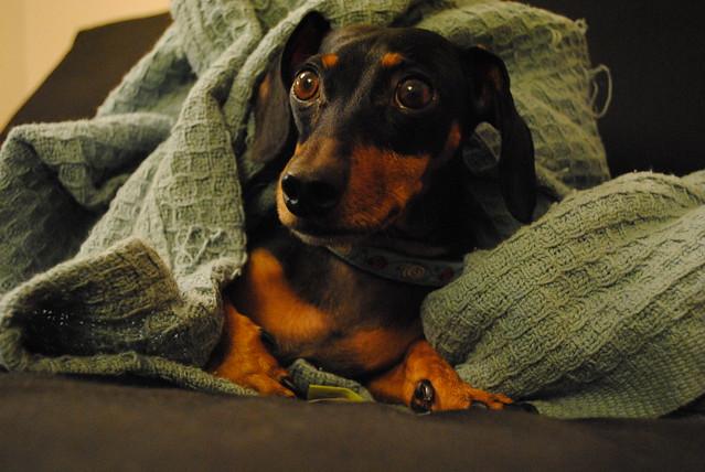 [282/365] Puppy Dog Eyes