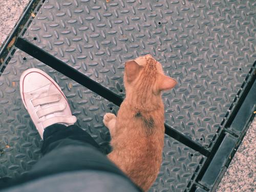 hello random ginger cat