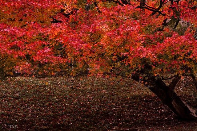 autumn color_3