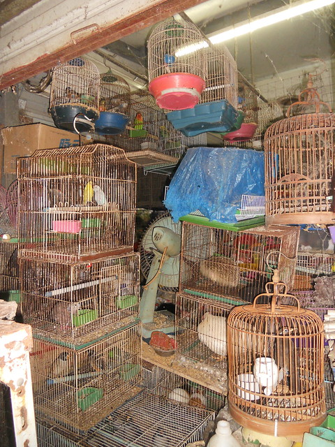 Chinese pet market