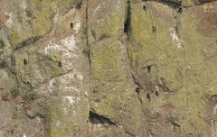 cormorantscliff