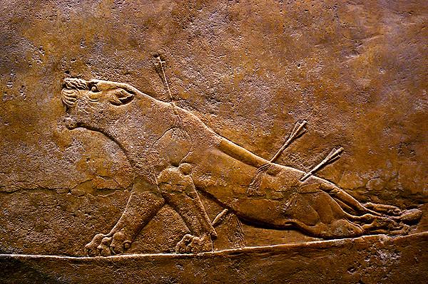 assyrian lions 6.JPG