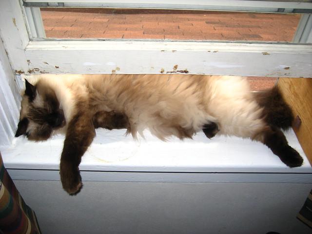 Tantra's favorite nap spot