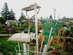 Beresford Community Garden
